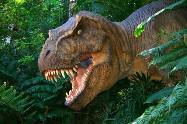 Фотообои динозавр в лесу тираннозавр (animals-0000147)