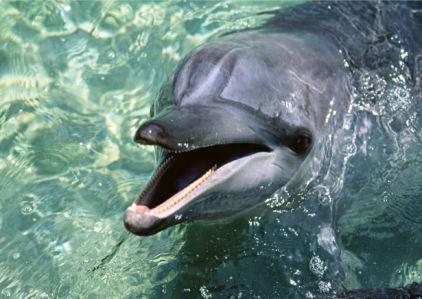 Фотообои дельфин разговор (animals-0000343)