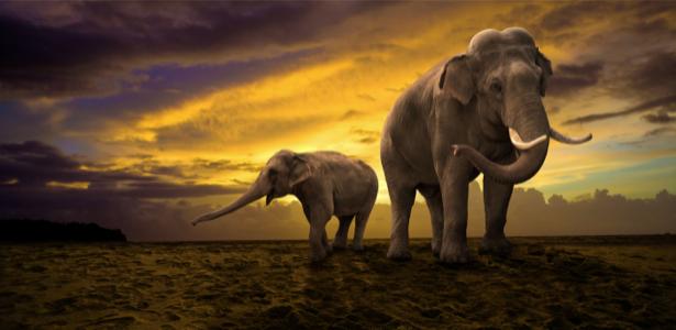 Фотообои Слоны зкат (animals-0000433)
