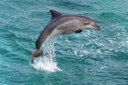 Фотообои Прыжок дельфина (animals-520)