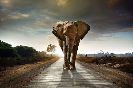 Фотообои Слон на восходе (animals-555)