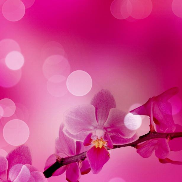 Розовая орхидея фотообои на стену цветы (flowers-0000036)