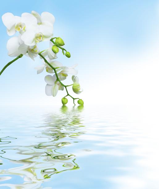 Белая орхидея фотообои цветов на стену (flowers-0000049)