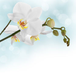 flowers-0000057
