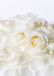 flowers-0000099