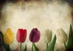 flowers-0000167