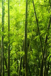 Фотообои в зал бамбуковая роща (flowers-0000487)