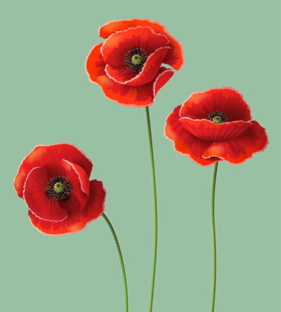 Обои на стену Маки (flowers-0000717)