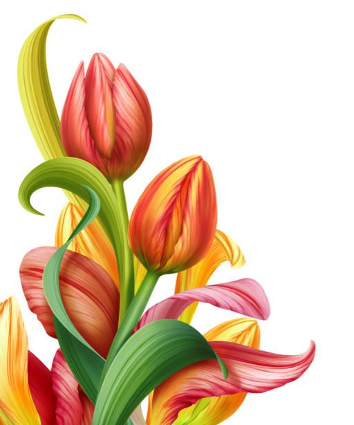 Фотообои Красные тюльпаны (flowers-743)