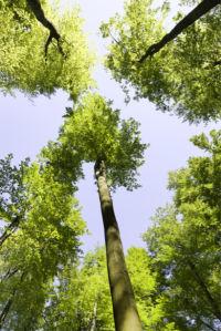 Фотообои природа лес, крона (nature-0000806)