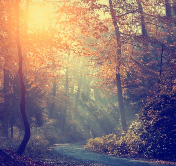 Фотообои лесная дорога осень (nature-0000822)