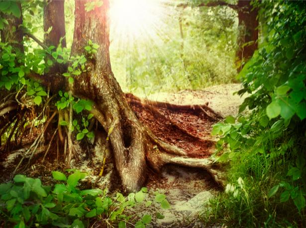 Фотообои лес, закат (nature-00302)