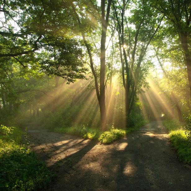 Фотообои лес дорога солнце (nature-00511)