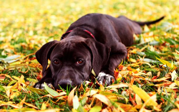 Фотообои собака осень (animals-0000063)