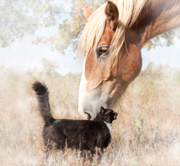 Фотообои  кот и конь (animals-0000388)