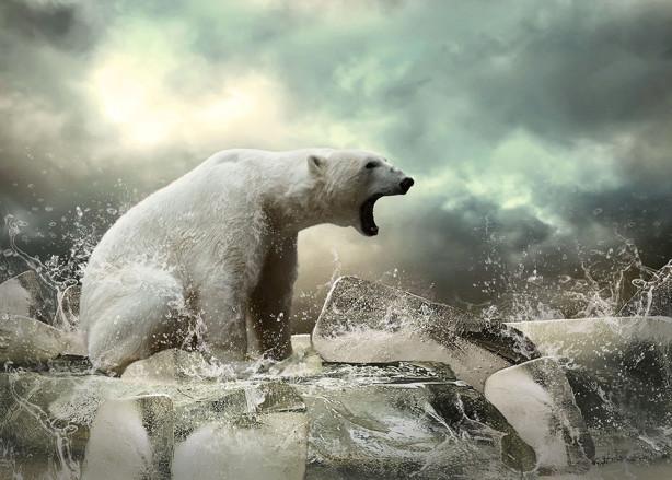 Белый медведь фотообои (animals-0000505)