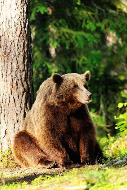 Фотообои Отдых под деревом (animals-529)