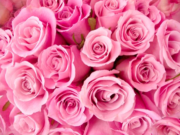 Розовые розы фотообои цветов (flowers-0000287)