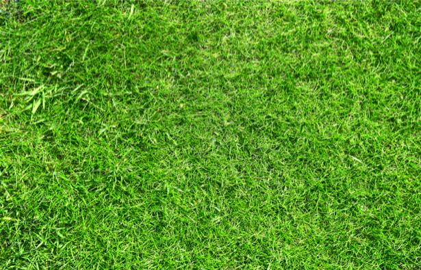 Фото обои трава сверху (flowers-0000460)