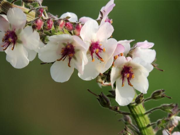 Фото обои для стен Цветущая ветка (flowers-0000514)