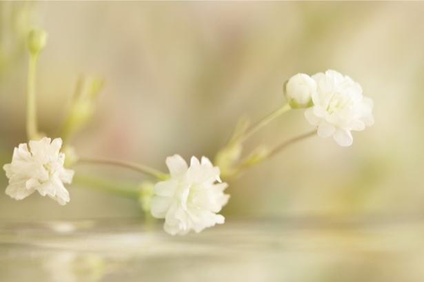 Фото обои для стен полевой цветок (flowers-0000516)