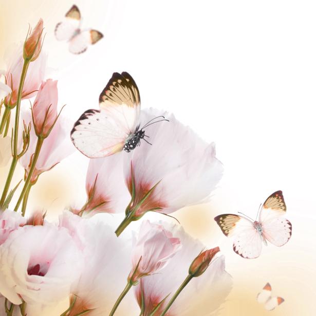 Обои на стену белые цветы, бабочки (flowers-0000576)
