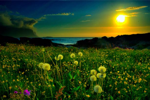 Фотообои закат солнца, поле (nature-00062)