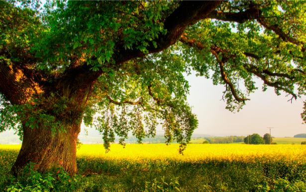 Фотообои виды природы дерево в поле (nature-00076)