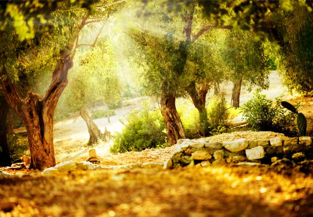 Фотообои с природой лес фото (nature-00090)