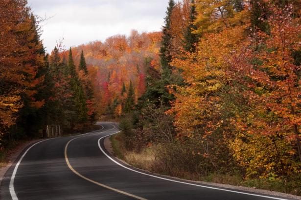 Фотообои извилистая дорога лес (nature-00515)