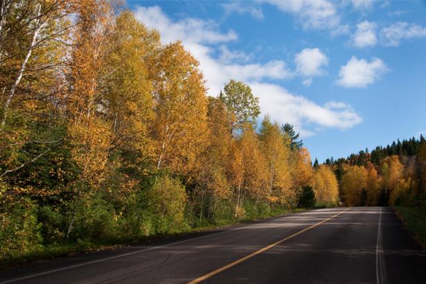 Фотообои трасса дорога лес (nature-00518)