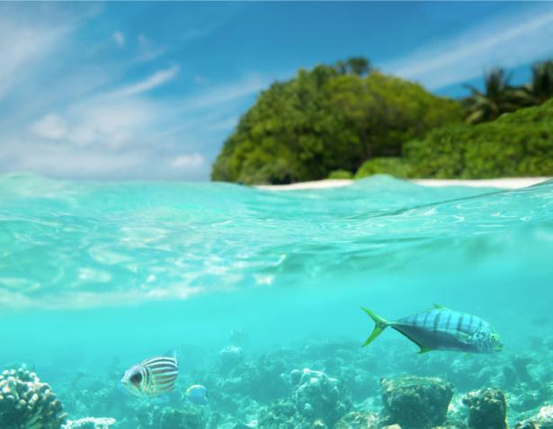Фотообои море берег рыбки (sea-0000301)