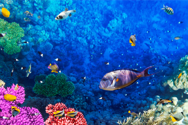 Фотообои ванную мир подводный кораллы (underwater-world-00028)