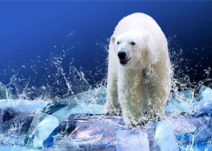 Фотообои на льду белый медведь (animals-0000049)