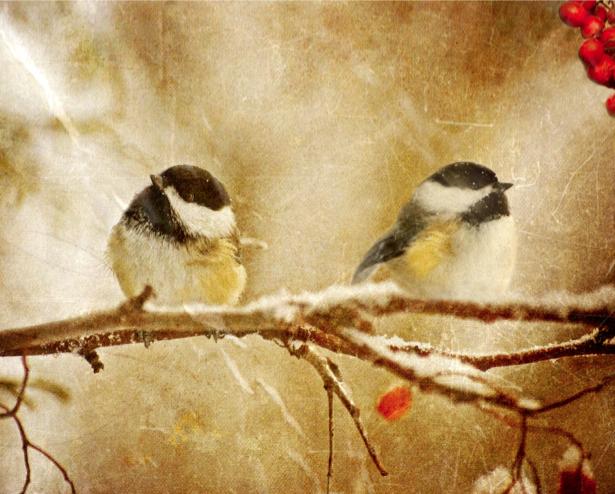 Фотообои зимние птицы пара (animals-0000316)