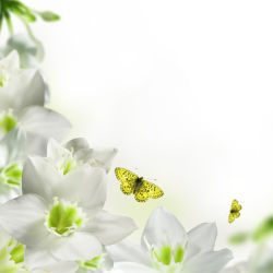 flowers-0000198