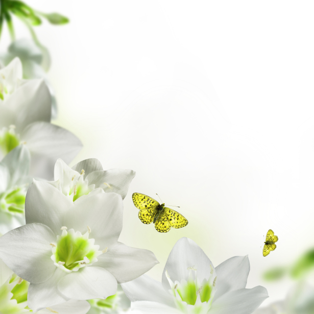 Обои фото Белые цветы бабочки (flowers-0000198)