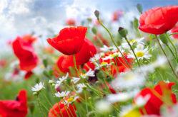 flowers-0000269