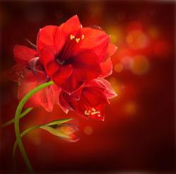 flowers-0000396