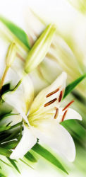 flowers-0000531