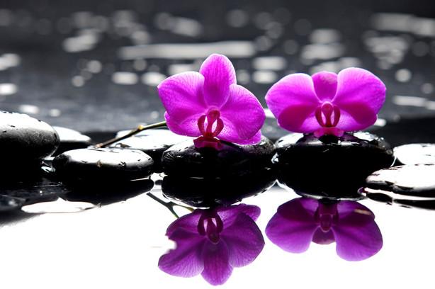 Фотообои Орхидеи на камнях (flowers-793)