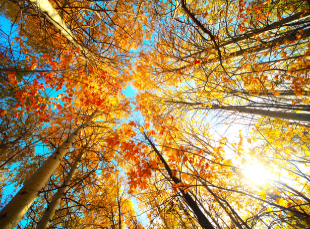 Фотообои деревья осенний лес (nature-00522)