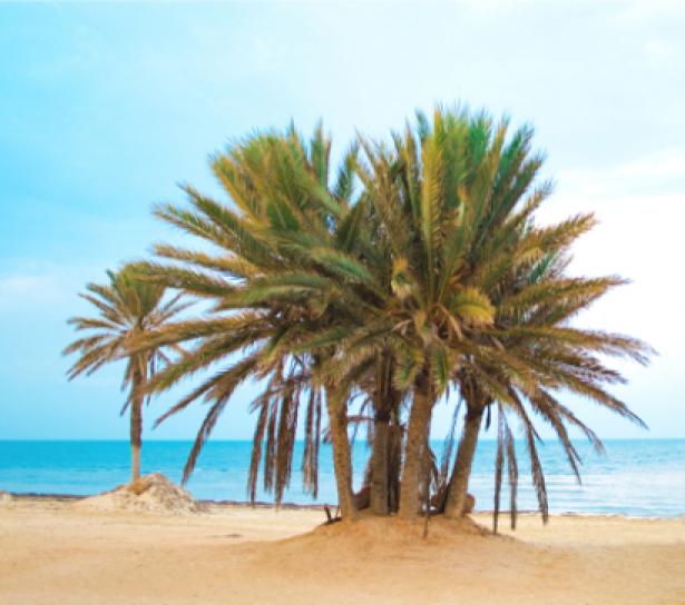 Фото обои море экзотические пальмы (sea-0000013)