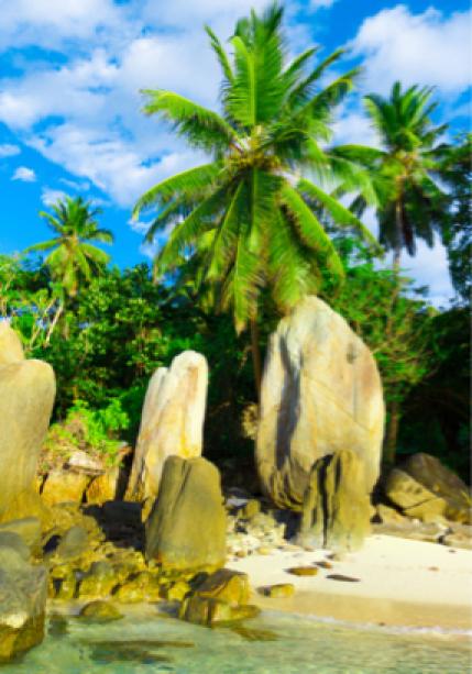 Фото обои море пальмы берег остров (sea-0000016)