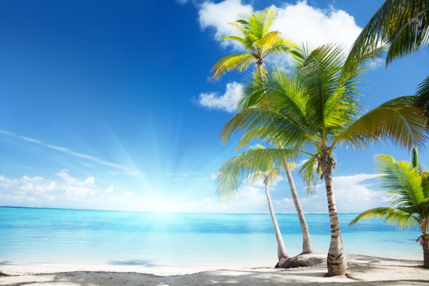Фотообои море солнце пальмы (sea-0000181)