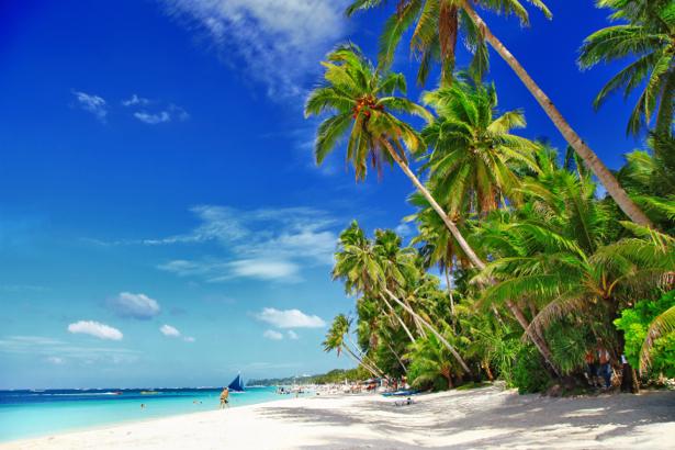 Фотообои экзотический пляж с пальмами (sea-0000191)