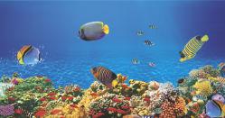 underwater-world-00056