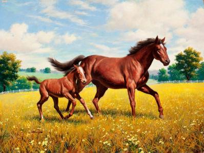 Фотообои лошади семья (animals-0000012)