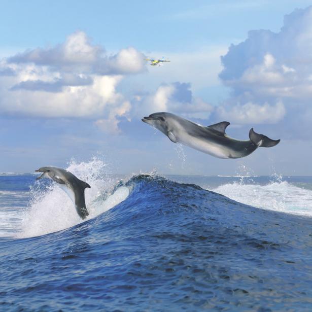 Фотообои с природой дельфины над водой (animals-0000031)