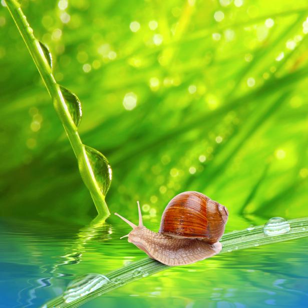 Фотообои улитка капли росы (animals-0000184)